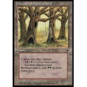 MTG Magic ♦ Fallen Empires ♦ Havenwood Battleground English NM