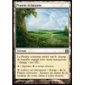 MTG Magic ♦ Commander 2012 ♦ Prairie Éclatante VF NM