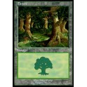 MTG Magic ♦ European Land Program ♦ Forest English NM (United Kingdom)