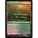 MTG Magic ♦ Zendikar ♦ Plaines Marécageuses VF FOIL NM